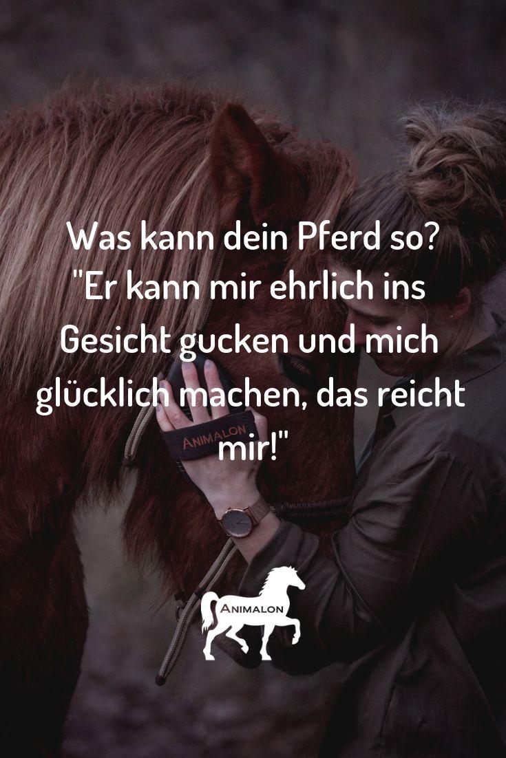 Pferde sind ehrlicher als die meisten Menschen. Lass Dich von unseren schönsten Pferdesprüchen inspirieren. Weil Dein Pferd besonders ist.  Animalon…