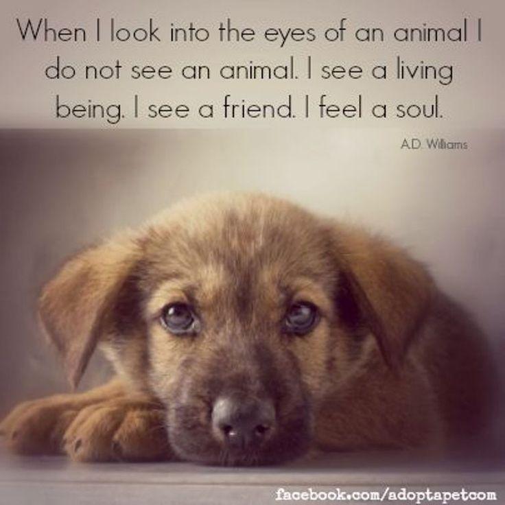 I see a friend. I feel a soul.