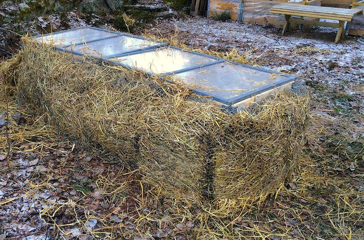 Vi bygger varmbenk i februar. Hvis alt går bra, kan vi dyrke grønnsaker ute fra mars og høste egendyrket tidlig, tidlig. Det er forsøket verdt.