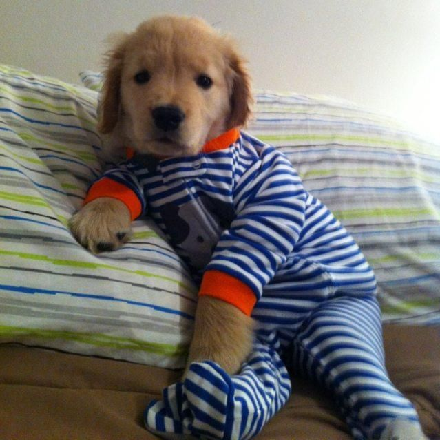 Footy Puppies Pajamas