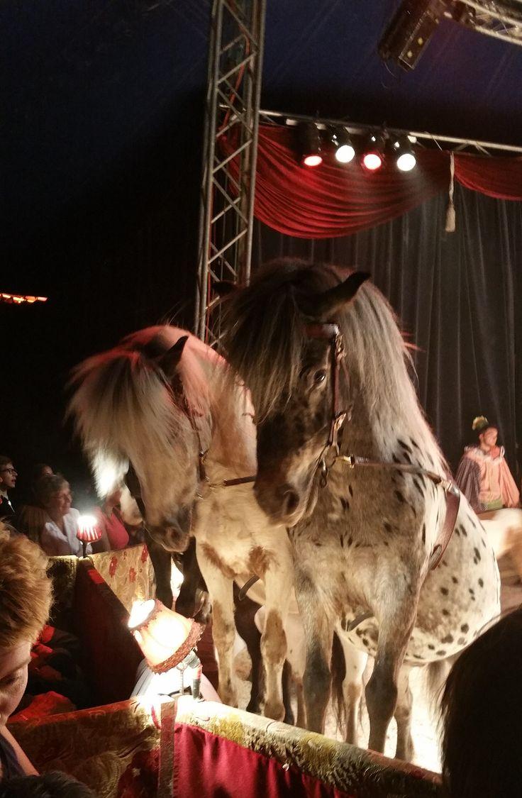 Circus in de buurt is sfeervol - Hobby.blogo.nl - Hobby.blogo.nl