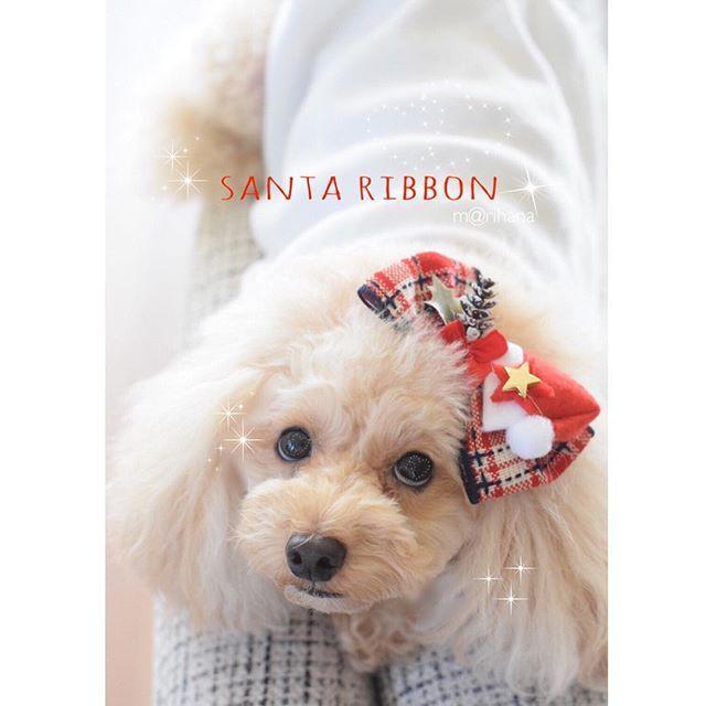 『Xmasサンタ帽のバレッタ』  クリスマス🎄のサンタ帽子がついた大きなおリボンです❤️ プーちゃんの目にはハート♡が!! これだけでも存在感ある大きなリボンバレッタです✨  #クリスマス #クリスマスリボン #ドッグアクセサリー #プードル#トイプードル#トイプードルアプリコット#dog#愛犬#犬#ペット写真#ペット#poodle#プーちゃん#マリハナ#いぬ#動物#イヌスタグラム#ふわもこ部#animal#east_dog_japan#dogstagram#dogaccessory#ハンドメイド