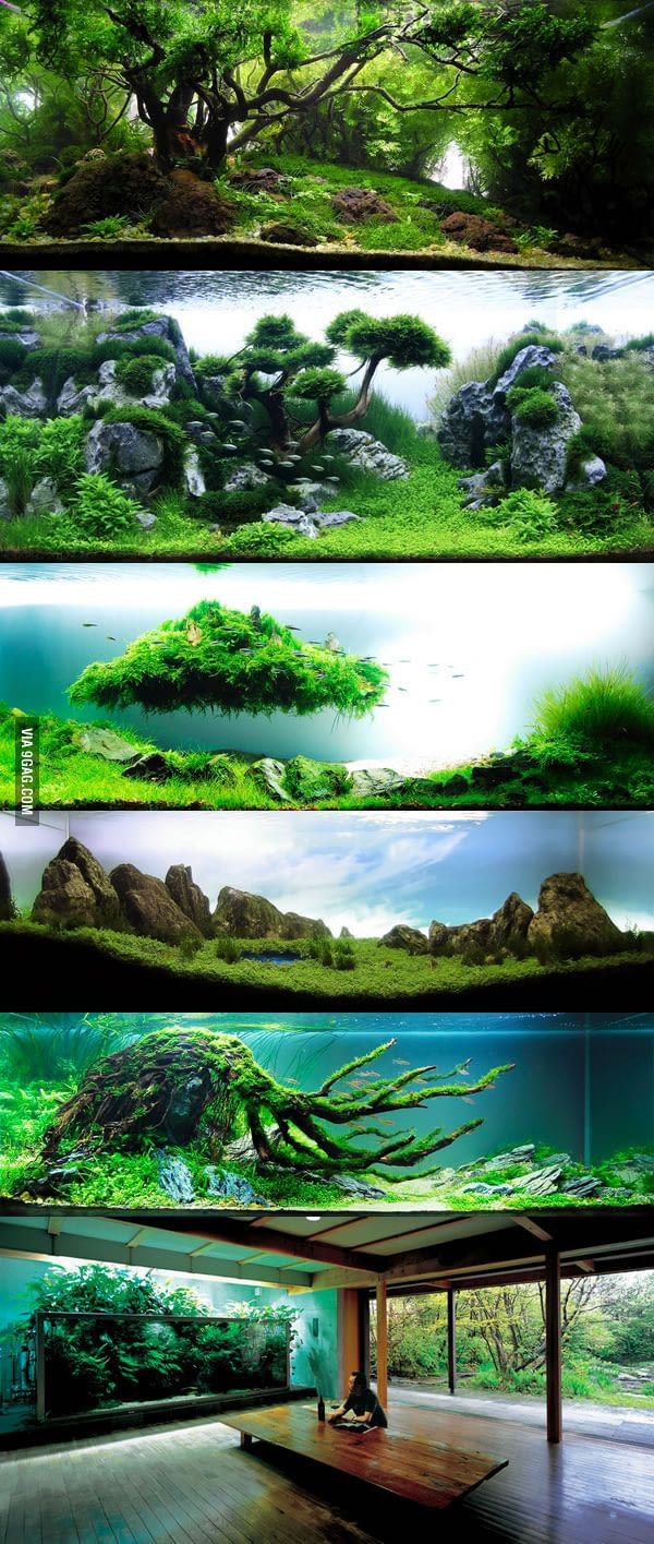 We lost the father of modern aquascaping. Here is some of his work. RIP Takashi Amano