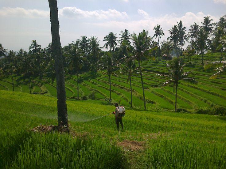 Bali, Buleleng - Panji : Panorama in a view beautiful