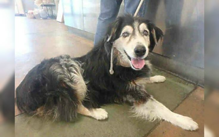 shares Share on Facebook Share on Twitter For Clyde, words can not express how he must feel after his family wanted to do away with him for good. After 17 long years of companionship, and undying loyalty, the senior pup was dumped at the...