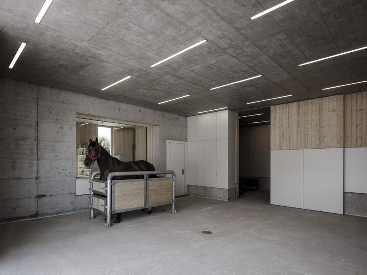 Griss Equine Veterinary Practice in Austria by Marte Marte Architects