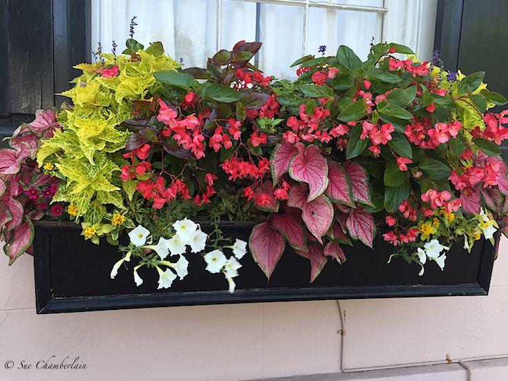 Charleston window box flower box balcony pinterest for Jardineras para balcones