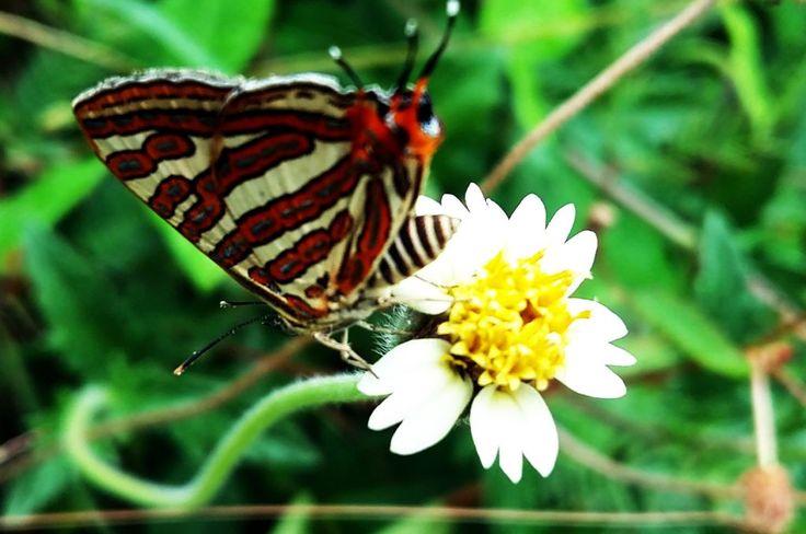 Beauty of Nature ( Butterflies & Flowers )