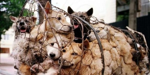"""STOP """"2016 YULIN EATING DOG MEAT EATING FESTIVAL"""" IN CHINA"""