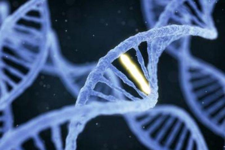 Genes que vuelven a la vida tras la muerte