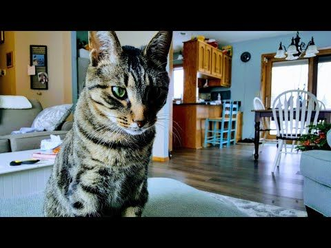 Cats Have Catnip And Become Very Playful Kittens Blessings Of Four Seasons Vlog Youtube Kittens Cute Kitten Gif Cats