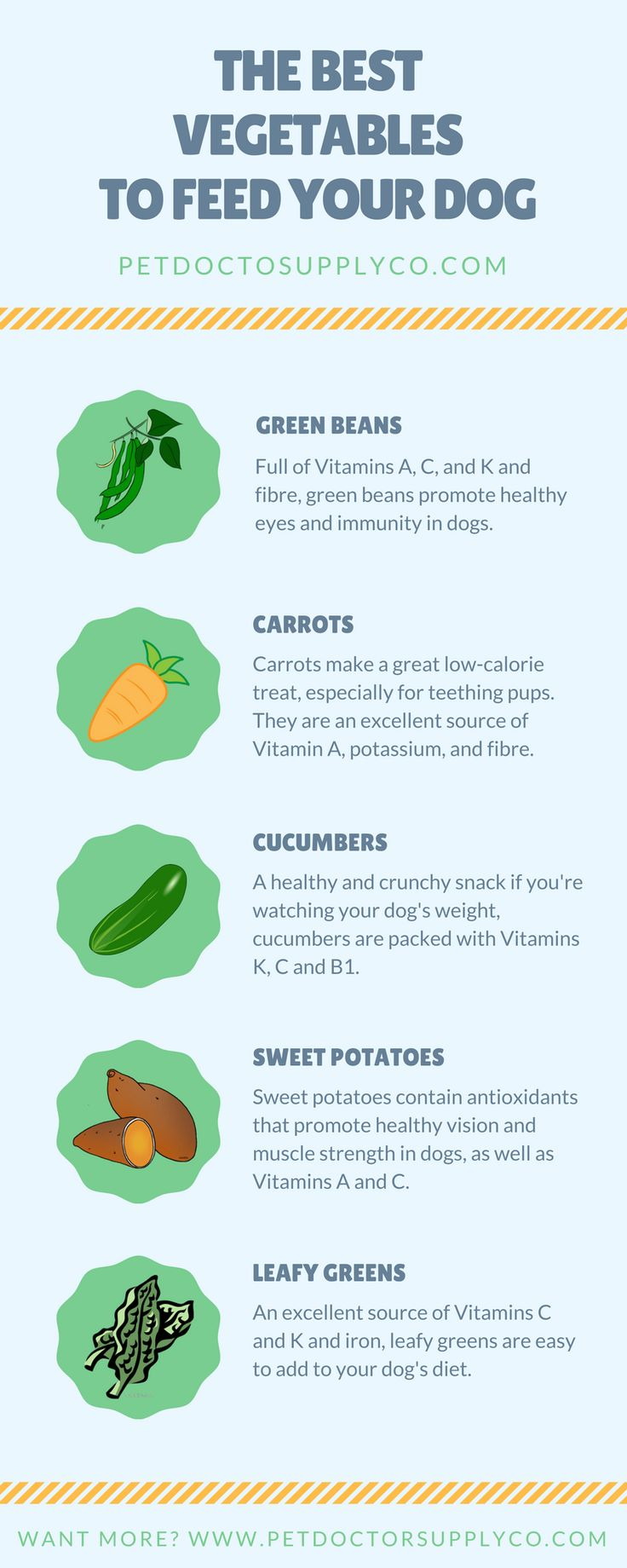 The Best Vegetables to Feed Your Dog | Want to pack some extra healthy punch into your dog's diet? Try one of the healthiest vegetables for your dog. To learn more about their benefits, click through!