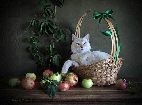 Фото, автор kim.tania2011 на Яндекс.Фотках