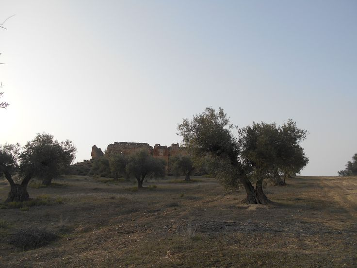 El Castillo de Villalba, al fondo, entre los olivos