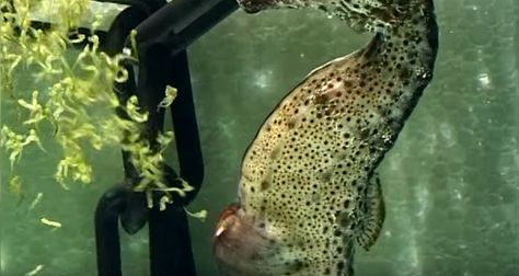 Seahorses are adorable. Their birthing process is not.Video Of The Day: Watch A Seahorse Give Birth To 2,000 Babies In 30 Seconds