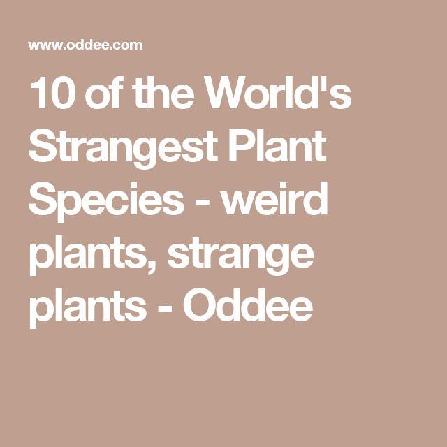 10 of the World's Strangest Plant Species - weird plants, strange plants - Oddee