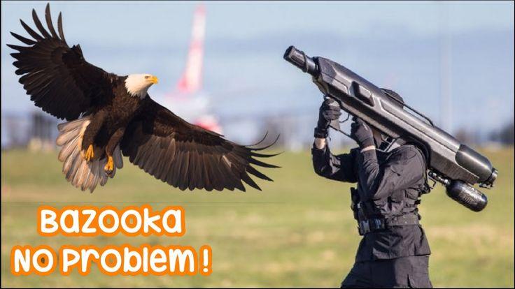 Golden Eagle Attack Man   CRAZIEST animal attacks human   Most Amazing W...