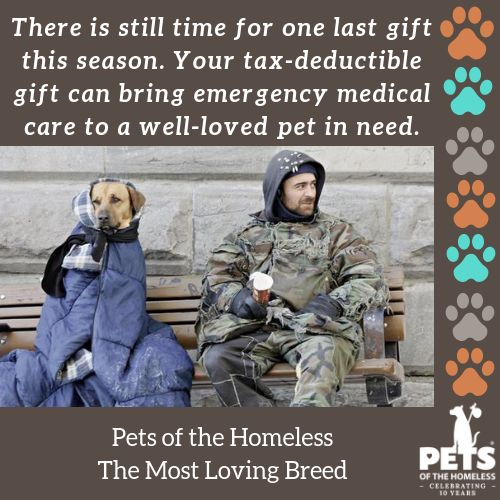 Emergency Veterinary Care for Pets of the Homeless