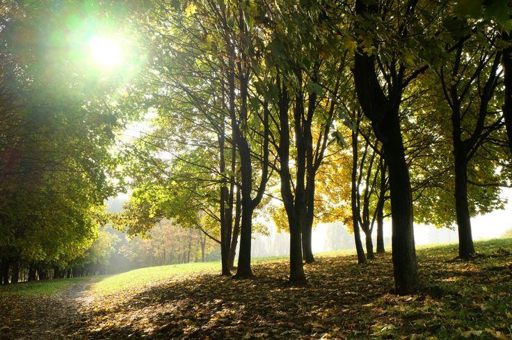 Autumn, Poland