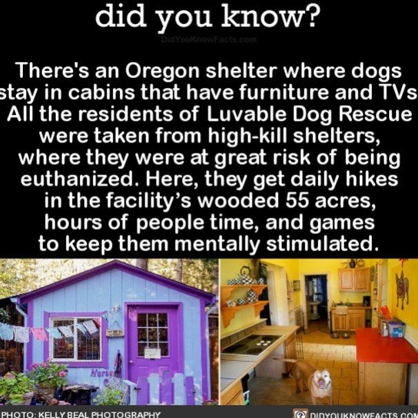 Oregon shelter with dogs from Luvable Dog Rescue