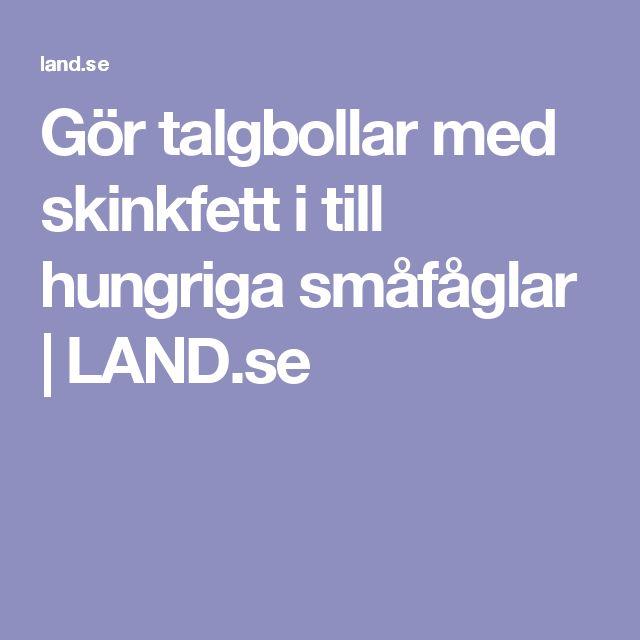 Gör talgbollar med skinkfett i till hungriga småfåglar | LAND.se