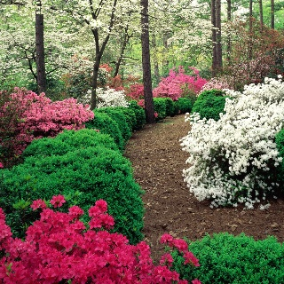 17 best images about woodland garden ideas on pinterest for Woodland garden designs ideas