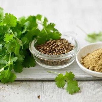 #10over10 #information #about #herbs #spices #vegetables #fruits #plants #tree #fresh #and #dry #today #the #chef #is #coriander #كزبرة ...Coriander Coriander is a plant of which both the leaves and the seeds are used in the culinary arts. When the coriander leaves are used they are considered an herb. Coriander leaves can be used fresh or dried and ground. Coriander leaves also known as cilantro have a bright almost citrus-like flavor. Coriander leaves are used in all sorts of cuisines…