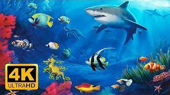 The Best 4K Aquarium for Relaxation  Sleep Relax Meditation Music - 2 hours - 4K UHD Screensaver - YouTube
