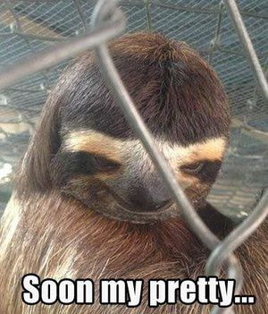 876a5e65acdacb213561b7f4af1e95b1 creepy sloth meme sloth memes best 25 sloth memes ideas on pinterest sloth humor, cute,Sloth Meme Images