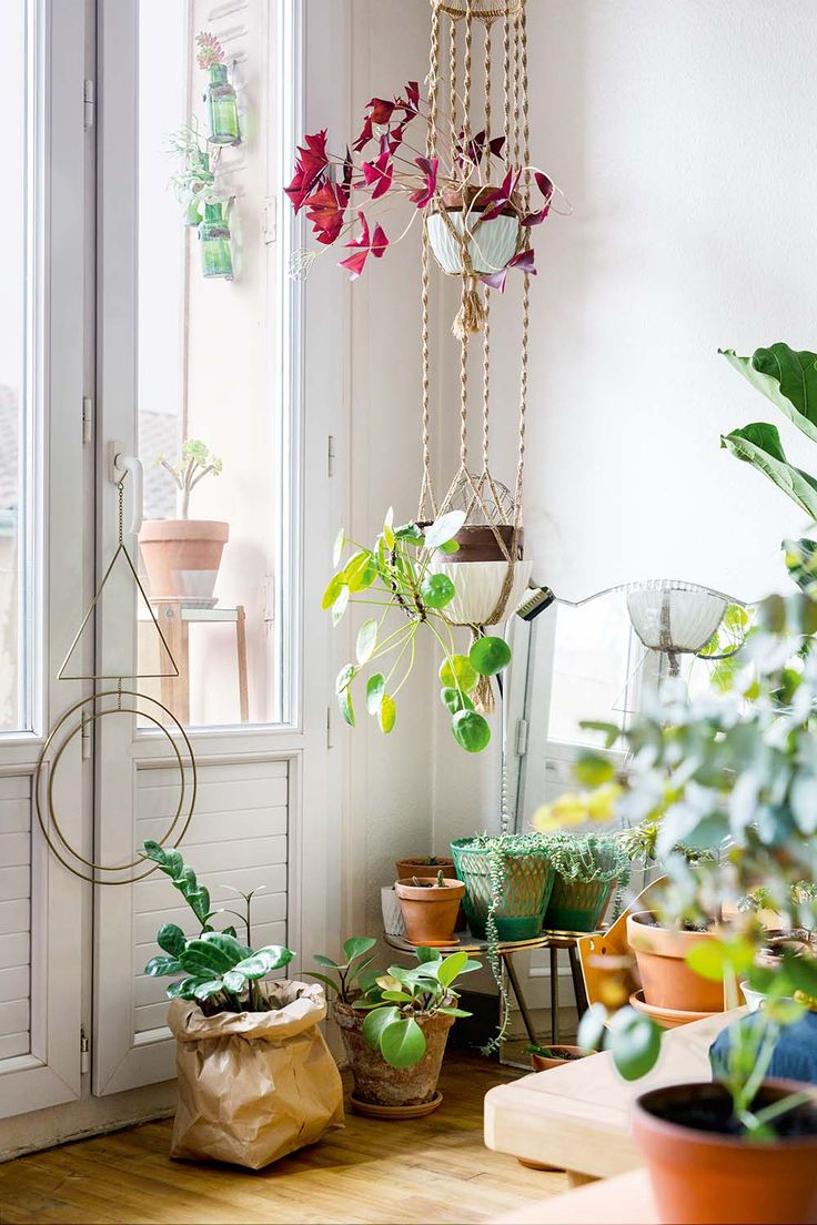 6 Ways To Decorate With Plants