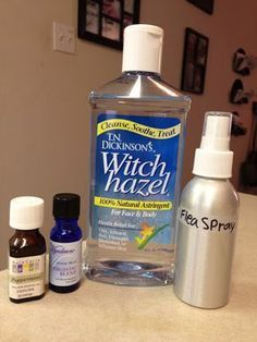 Essential Oil Flea Repellent: Hello Homemade | The All-Natural Me