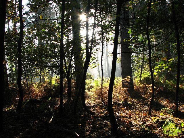 autumn at daisey   Flickr - Photo Sharing!