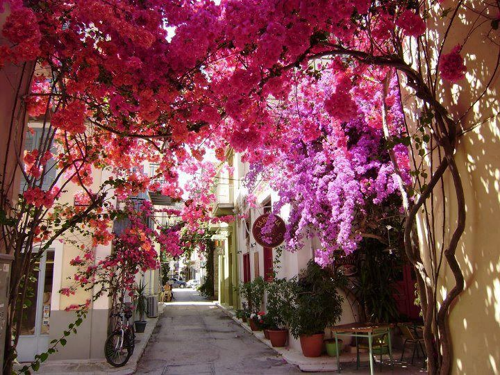 Flowercovered Nafplio in Peloponnese - Greece