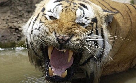 Wild animals can be kept as pets without being checked on under changed law – Fierce Animals ect.
