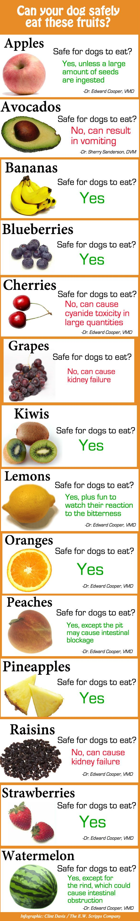 Infographic of which fruits are safe to share with pups