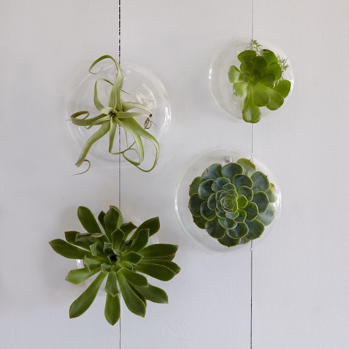 A wall full of succulents on these planters. Yes!