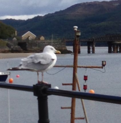 Barmouth bridge from quayside