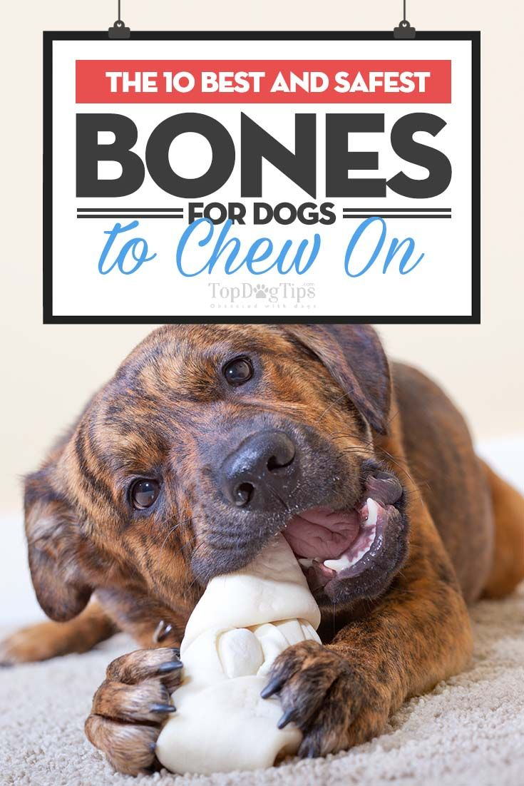 10 Best Bones For Dogs To Chew In 2018 Safe And Healthy Options