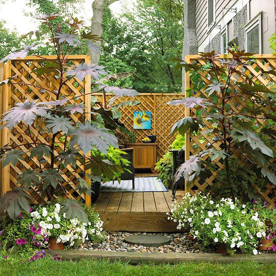 17 Best Images About Gardening Tips And Ideas On Pinterest: 17 Best Images About Yard Privacy Fence/plant Etc Ideas
