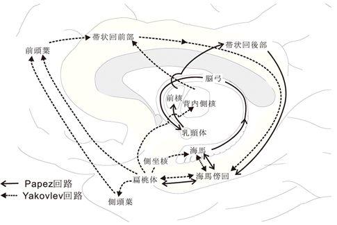 [記憶を担う解剖学的基盤]papez回路、Yakovlev回路、統合筋神経学講義シラバスp61