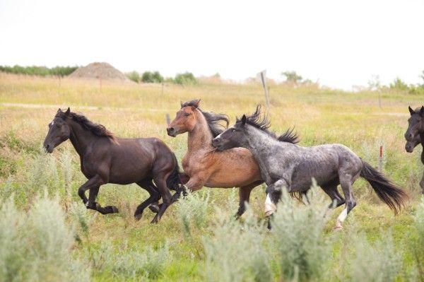 Sitting Bull's Lost Horses? — Medium