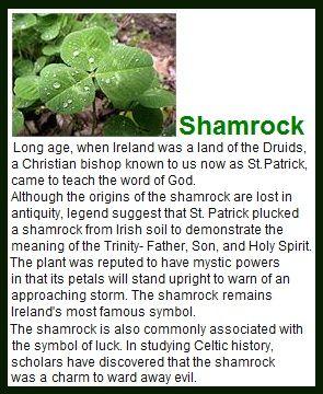 celtic-irish shamrock