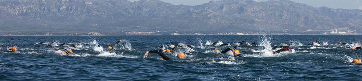 Unes curses d'aigües obertes a l'Ametlla de Mar: la Tuna Race Balfegó.