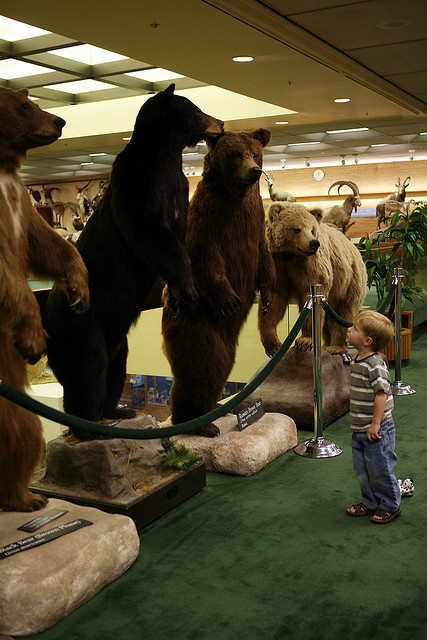 Learn about animal life at the BYU Monte L Bean Museum in Provo, Utah