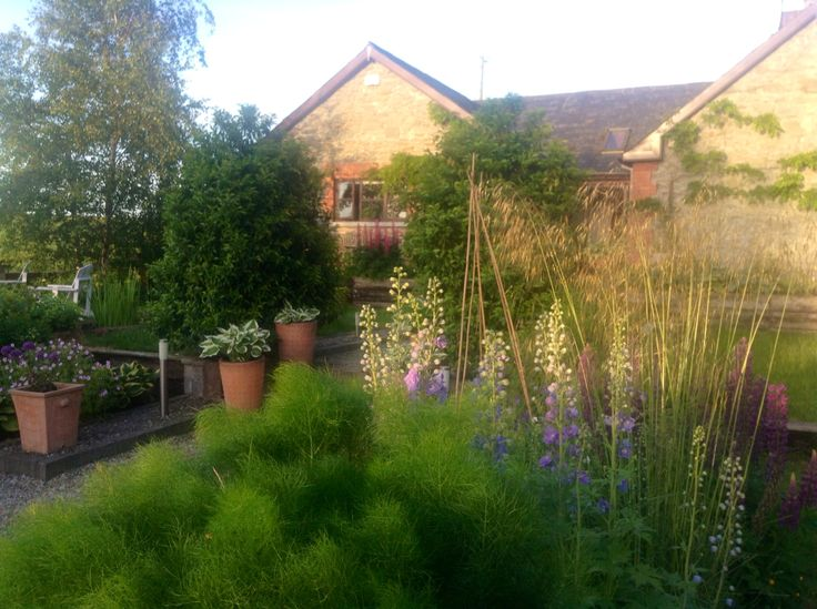 Fennel , Delphiniums & Cottage