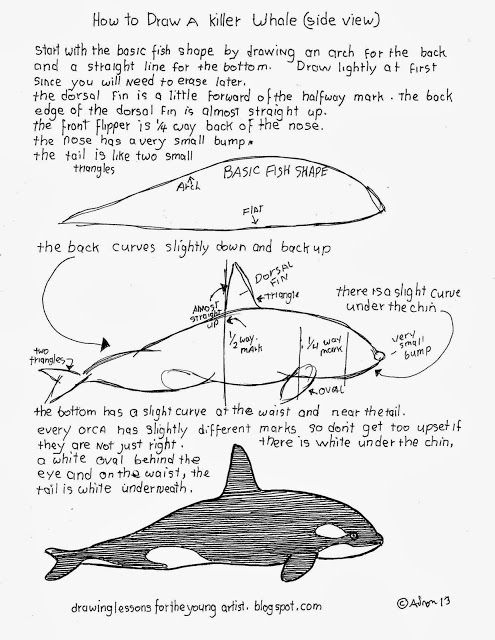 How to Draw Worksheets for The Young Artist: How To Draw An Orca Killer Whale Side View Worksheet