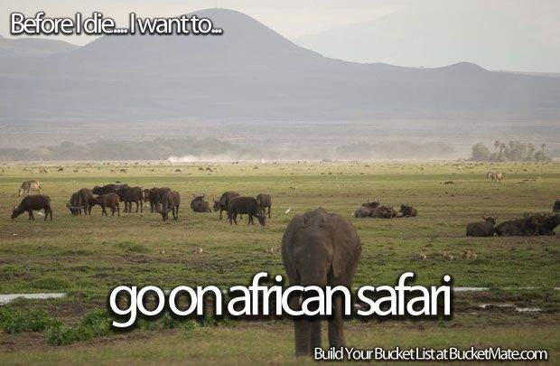 Before I die, I will...Go on African Safari
