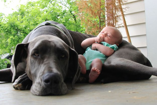This dog who will do anything to protect her sleeping angel. | 23 Dogs Who Really Love Their Best Friend