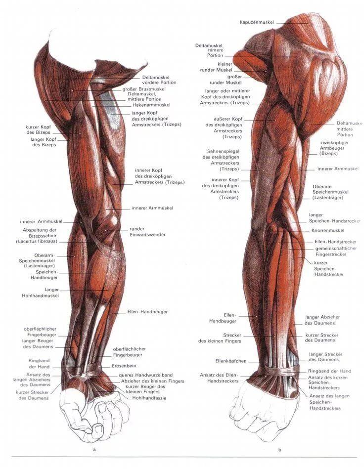 Mejores 25 imágenes de anatomia en Pinterest | Anatomía, Anatomía ...