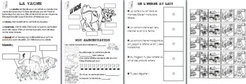 dossier sur la vache laitière